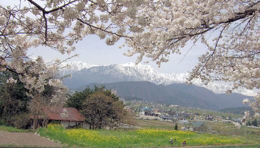 Sakura_000_2