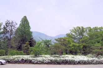 Ueda_1_2