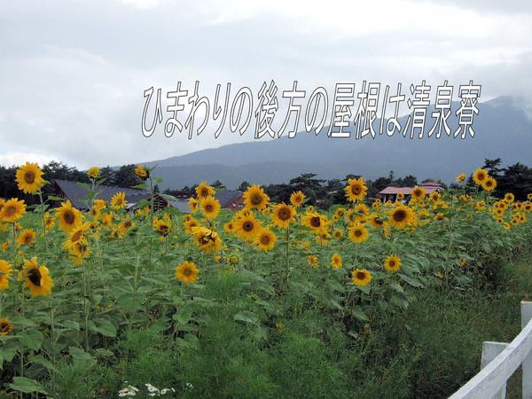Himawari_000