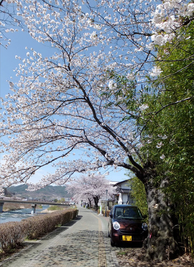 Sakura_001