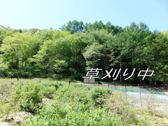 Hatake_01