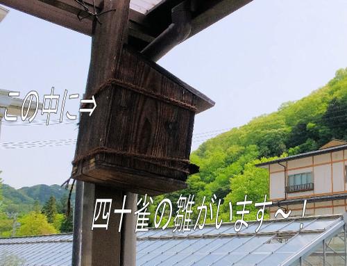 Ytori_1