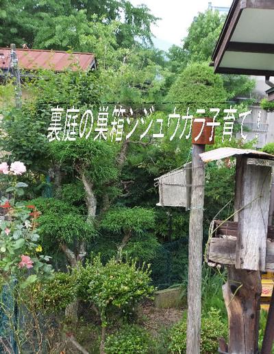 Subako_1