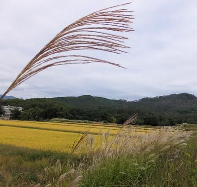 Susuki_00001